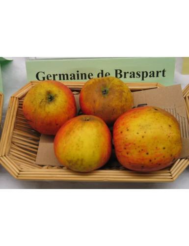 Pommier - Germaine de...