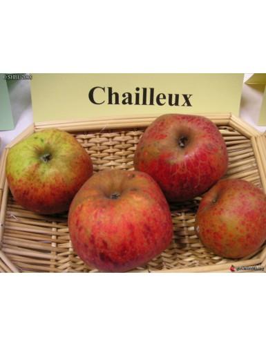 Pommier - Chailleux (Draps...