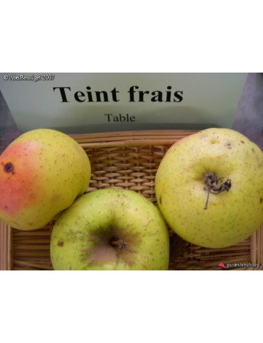 Pommier - Teint Frais