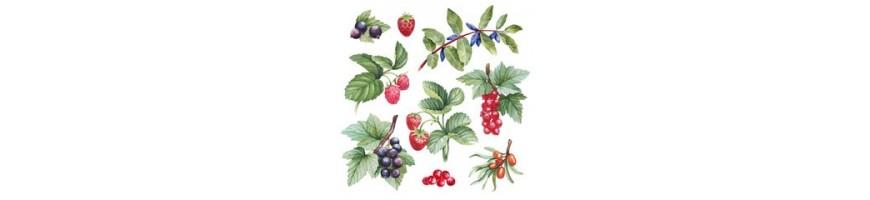 tous les arbustes à petits fruits