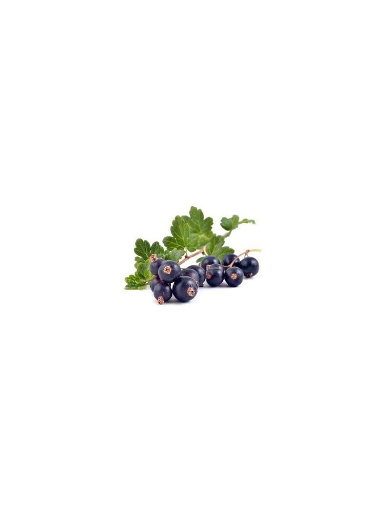 Arbuste Fruitier Cassissier De Variete Noir De Bourgogne Forme De